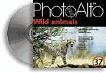 Wild animals (ALT-PA037)