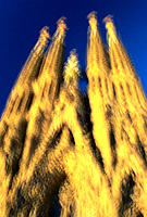 Sagrada Familia (Church of the Holy Family). Barcelona. Spain