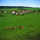 10306172, village, canton Jura, La Bosse, scenery, horses, Switzerland, Europe, wood, forest, meadow,