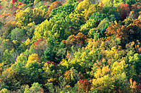 Deciduous Forest in the autumn. Shenandoah National Park. Virginia. USA