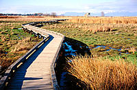 Boardwalk over wetland. Boundary Bay Park. Canada