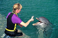 Dolphin discovery program for guests interaction. Florida Keys. USA