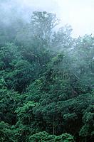 Rainforest. Vietnam