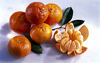 Clementines, Leaves, Still life