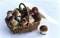 Basket, King boletus, Still life