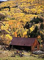 Barn and fall colors. Colorado. USA