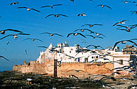Essaouira. Morocco