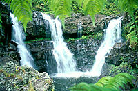 Hawaii, BigIsle, Rainforest waterfalls, three waterfalls feeds into one pool C1645
