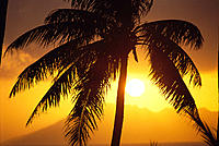 French Polynesia, golden sunset over island of Moorea, palm tree C1784
