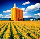 Revolutionary corn storage elevator