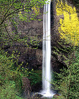 Latourell Falls, plunge type falls located on Latourell Creek. Multnomah County. Oregon. USA
