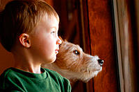 Two-year old boy and jack russell terrier dog looking out window