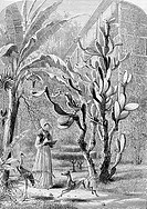 A Garden In Florida Artist Unknown Etching