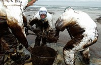 Soldiers dressed with protective clothing cleaning up the oil spill (´chapapote´) from Prestige tanker. Dec. 2002. Costa da Morte. A Coruña province. ...