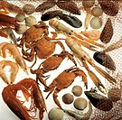 Assorted Crustaceans and Shellfish, Net