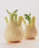 Two fennel bulbs (2)