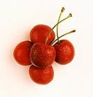 Five Fresh Cherries with Stems