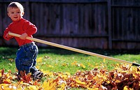 Toddler raking leaves
