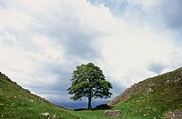 Hadrian´s Wall. Northumberland. England