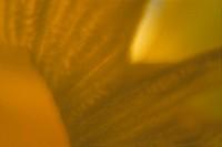 One Yellow Flower