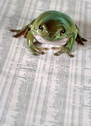 Frog in Eyeglasses Reading Financial Page