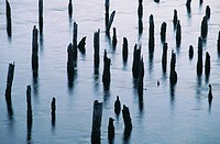 Pilings in Siuslaw River at dawn. Florence. Oregon. USA