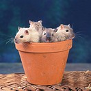 Gerbils