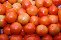 Organic farming: tomatoes