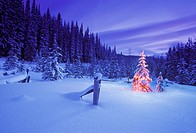 Christmas Tree with Lights Outdoors In the Mountains