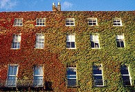 House covered in ivy. Dublin. Ireland