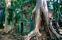 Ta Prohm Temple in the Angkor Wat complex. Angkor. Cambodia