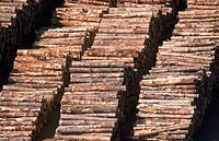 Log stockpile. Port Chalmers, South Island. New Zealand