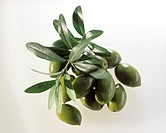 A heap of green olives and olive branches (1)