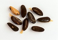 Pine nuts (unshelled)