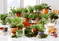 Lots of different herbs in pots in front of kitchen window