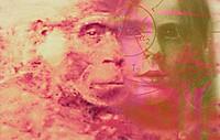 ´Evolution.   Conceptual  computer  artwork representing the evolution of modern humans (Homo sapiens) from ape-like ancestors.