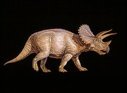 ´Triceratops dinosaur.  Artwork of the  herbivorous Triceratops dinosaur that lived from 72-65 million years ago,  during the Late Cretaceous period. ...