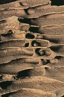 ´Termite nest.  Close-up of a spiral staircase in a nest that was built by Apicotermes termites. These are  social  insects  found  in  Africa.    Soc...