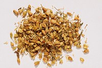 YARROW<BR>achillea milefolium.