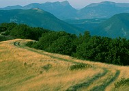 Path in grass and mountains in background