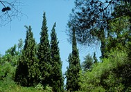 Trees, low angle view