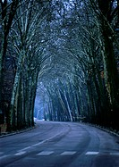 Road through tall trees