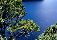 New Zealand, tree overlooking water, high angle view