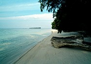 Malaysia, seashore with tree and driftwood