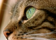 Cat with green eye, extreme close-up