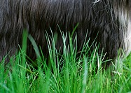 Dog's belly in grass, close-up