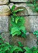 Foliage growing out of stone wall