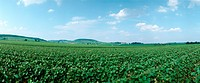 France, field, panoramic view