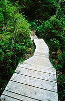Boardwalk to Hot Spring Cove. Maquinna Provincial Marine Park. British Columbia. Canada