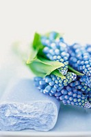 Hyacinths and soap
